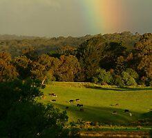 Late Light, Otway Farmlands by Joe Mortelliti