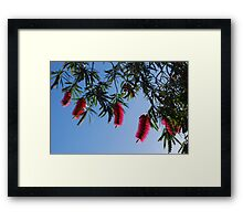 Aussie Reds in the Morning Sun Framed Print