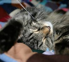 Cat stretched out sleeping on Colorful quilt by PhotoCrazy6