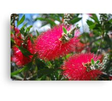 Aussie G'Day Canvas Print
