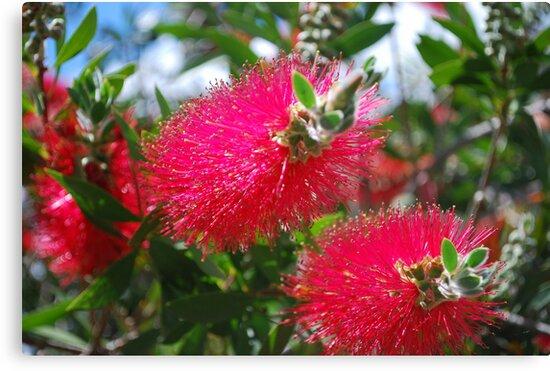 Aussie G'Day by Lozzar Flowers & Art
