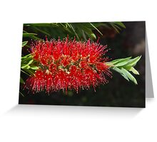 Aussie Red, Fiery red.  Greeting Card