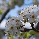 Fresh new blossum by Lozzar Flowers & Art