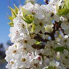 Blossum at the Lake by Lozzar Flowers & Art