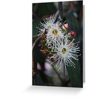 White Eucalyptus Flowers. Greeting Card