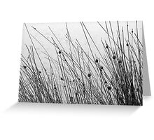 Grass by the sea Greeting Card