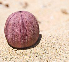 Beach Ball by inAWE