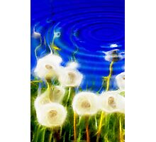 Abstract Dandelions Reflection Photographic Print