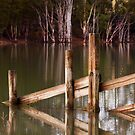 The Fence - Bent's Basin, NSW by Malcolm Katon