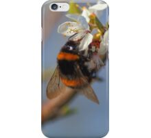 Buff-tailed Bumblebee (Bombus terrestris) On A Spring Blossom iPhone Case/Skin