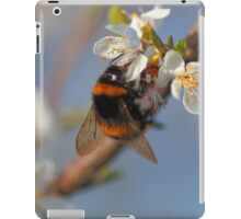 Buff-tailed Bumblebee (Bombus terrestris) On A Spring Blossom iPad Case/Skin