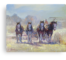 Draught Horses after Max Middleton  Canvas Print