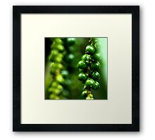 Photography of green paper Framed Print