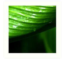 Photography of cardamon leaves Art Print