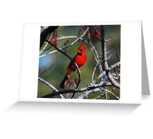 Northern Cardinal Greeting Card