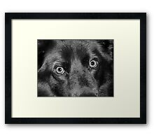 Emmit's Eyes Framed Print