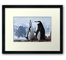 Chinstrap pinguins Framed Print