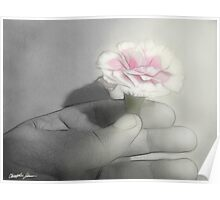 Pink Centered Carnations 2 - Contemplation Poster