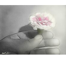 Pink Centered Carnations 2 - Contemplation Photographic Print