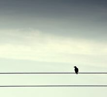 Spare-Ohs - Bird on a wire by Andrew Gilmore