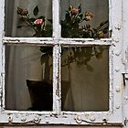 Window by RosiePosie