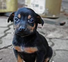 Doberman Puppie by Gruian Andrei