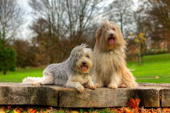 Bailey & Skye by Paul Thompson Photography