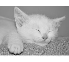 It's hard being a cat! Photographic Print