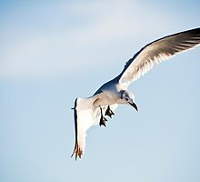 Gull by Greg Riegler