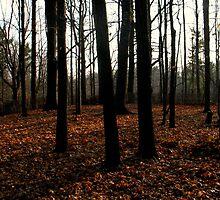 Velvet  Forest by MarianBendeth