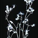 powder blue on black by elisabeth tainsh