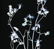 powder blue on black by elisabeth tainsh