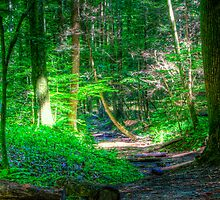 Pixy path by Ron Neiger