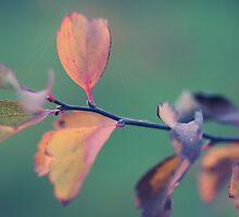 November Day by Anne Schwaderer