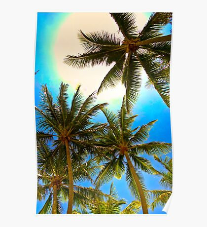 PalmCove - Coconut Trees at Midday 2 Poster