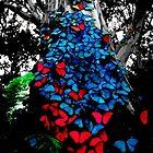 Butterfly Symphony by jillijude1