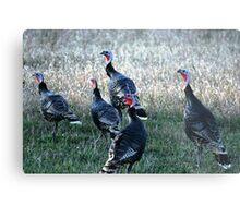 Turkeys-Maxwell Metal Print