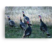 Turkeys-Maxwell Canvas Print