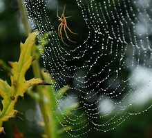 Rain Drops and Spider Webs by Rose Seymour