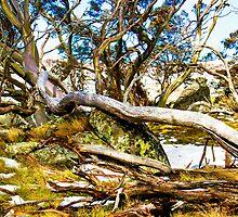 Gum trees and Snow - Perisher 3 by Geoffrey Thomas
