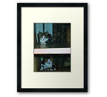 Double decker kittens Framed Print
