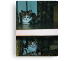 Double decker kittens Canvas Print