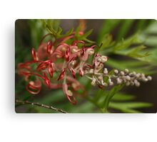 Aussie Red Beauty Canvas Print