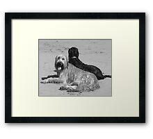 Briard Beach Bums #3 Framed Print