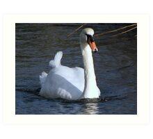 A very fine swan indeed.......... Art Print