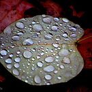 Autumn Jewels by Adrienne Berner