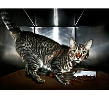 Shelter Cat Photographic Print