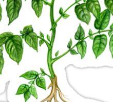 Potato (Solanum tuberosum) Sticker