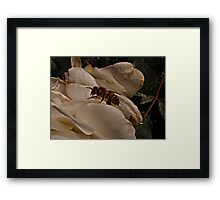 Bee Beauty Framed Print