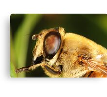 Bee Fly Canvas Print